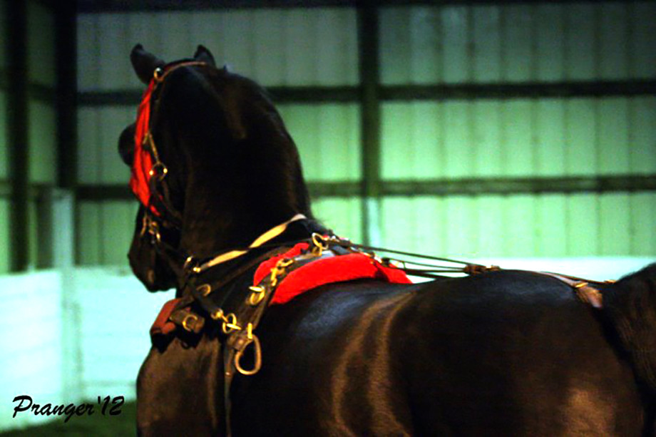 Cross Training for Show Horses – 4 Benefits