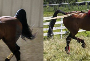 Same horse, two months apart. This is what poor maintenance can do!