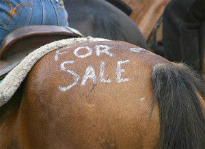 horse_for_sale